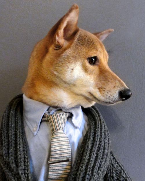 Moda para cachorros