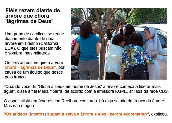 """Fiéis rezam diante de árvore que chora """"lágrimas de Deus"""""""