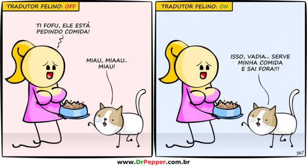 tradutor felino